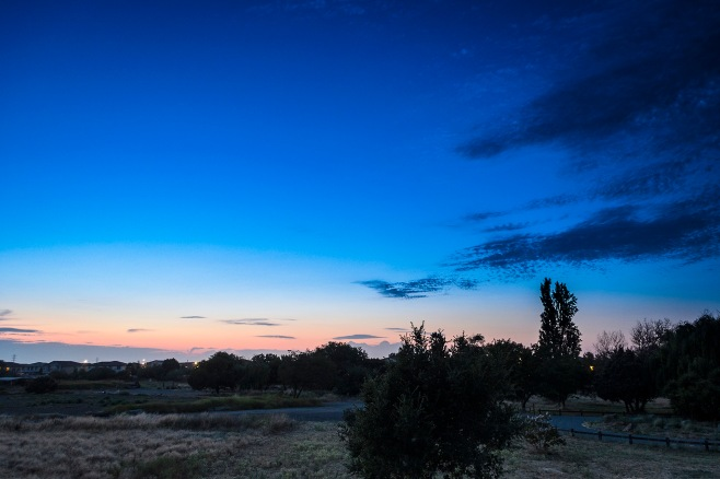 CoyoteSunset_1565
