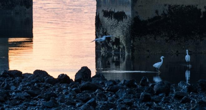 Dumbarton at Sunset8