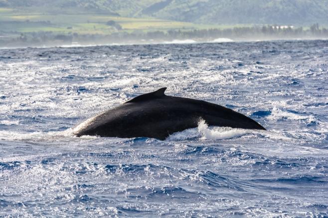 WhaleWatching321